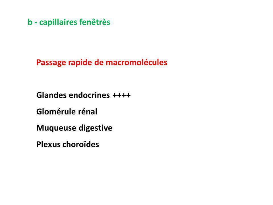 b - capillaires fenêtrès Passage rapide de macromolécules Glandes endocrines ++++ Glomérule rénal Muqueuse digestive Plexus choroïdes