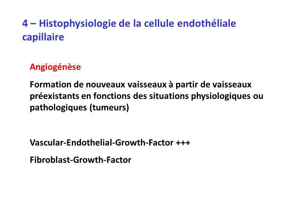 4 – Histophysiologie de la cellule endothéliale capillaire Angiogénèse Formation de nouveaux vaisseaux à partir de vaisseaux préexistants en fonctions des situations physiologiques ou pathologiques (tumeurs) Vascular-Endothelial-Growth-Factor +++ Fibroblast-Growth-Factor