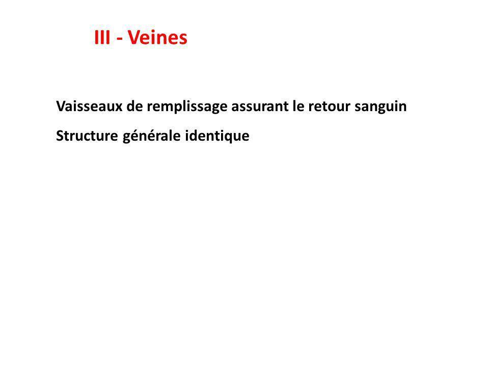 III - Veines Vaisseaux de remplissage assurant le retour sanguin Structure générale identique