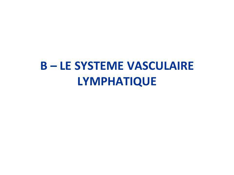 B – LE SYSTEME VASCULAIRE LYMPHATIQUE