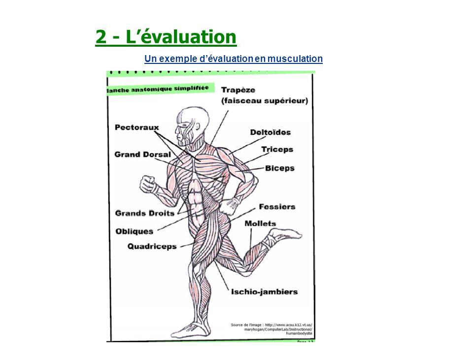 2 - Lévaluation Un exemple dévaluation en musculation