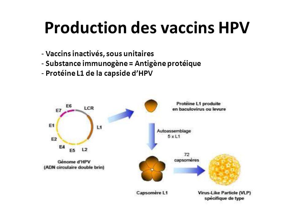Production des vaccins HPV - Vaccins inactivés, sous unitaires - Substance immunogène = Antigène protéique - Protéine L1 de la capside dHPV