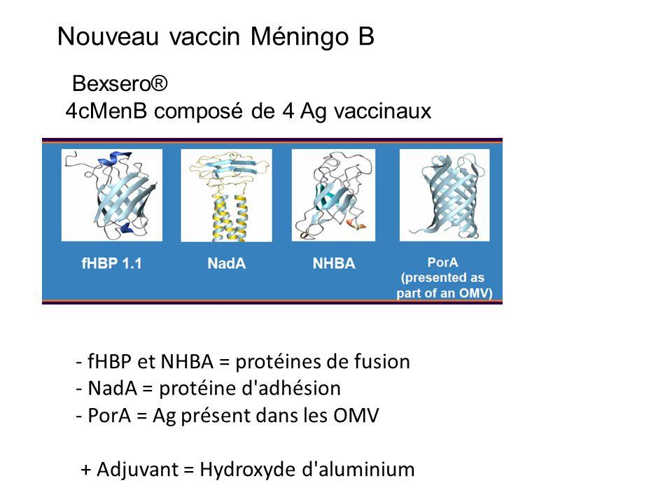 Bexsero® 4cMenB composé de 4 Ag vaccinaux Nouveau vaccin Méningo B - fHBP et NHBA = protéines de fusion - NadA = protéine d adhésion - PorA = Ag présent dans les OMV + Adjuvant = Hydroxyde d aluminium