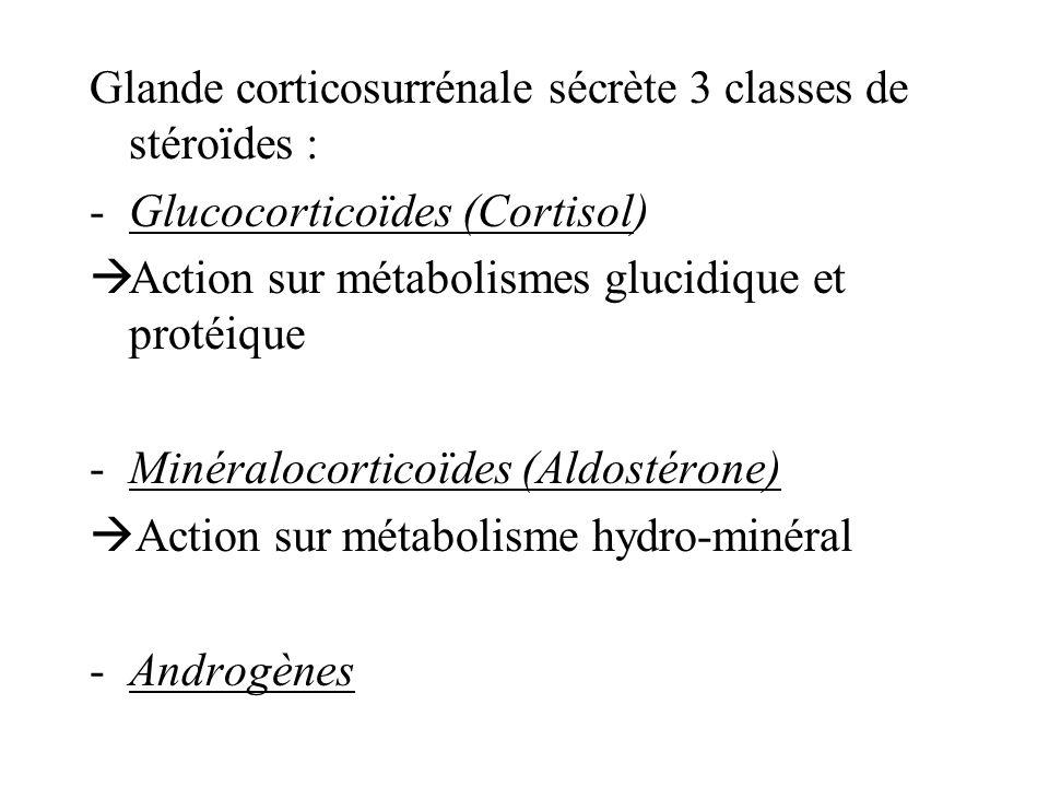 Glande corticosurrénale sécrète 3 classes de stéroïdes : -Glucocorticoïdes (Cortisol) Action sur métabolismes glucidique et protéique -Minéralocorticoïdes (Aldostérone) Action sur métabolisme hydro-minéral -Androgènes