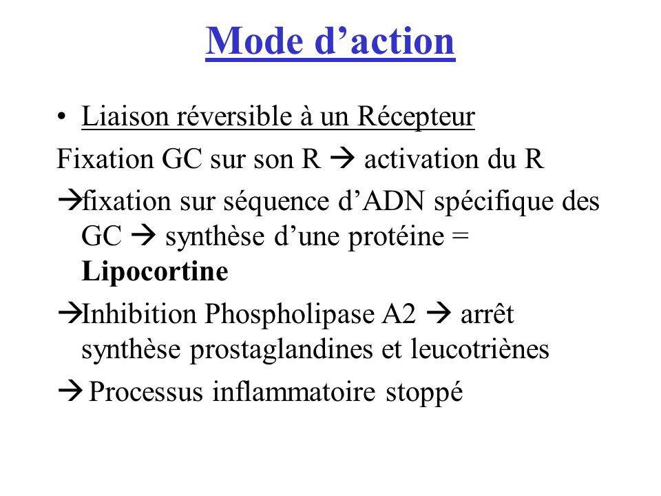 Mode daction Liaison réversible à un Récepteur Fixation GC sur son R activation du R fixation sur séquence dADN spécifique des GC synthèse dune protéine = Lipocortine Inhibition Phospholipase A2 arrêt synthèse prostaglandines et leucotriènes Processus inflammatoire stoppé