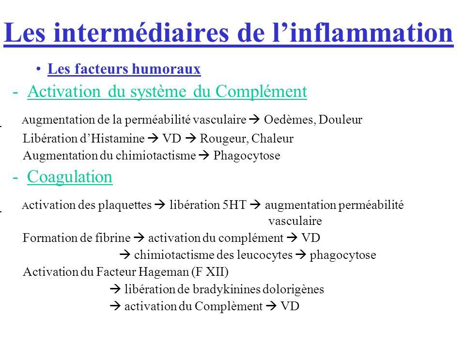 Les intermédiaires de linflammation Les facteurs humoraux -Activation du système du Complément - A ugmentation de la perméabilité vasculaire Oedèmes, Douleur - Libération dHistamine VD Rougeur, Chaleur - Augmentation du chimiotactisme Phagocytose -Coagulation - A ctivation des plaquettes libération 5HT augmentation perméabilité vasculaire - Formation de fibrine activation du complément VD chimiotactisme des leucocytes phagocytose - Activation du Facteur Hageman (F XII) libération de bradykinines dolorigènes activation du Complèment VD