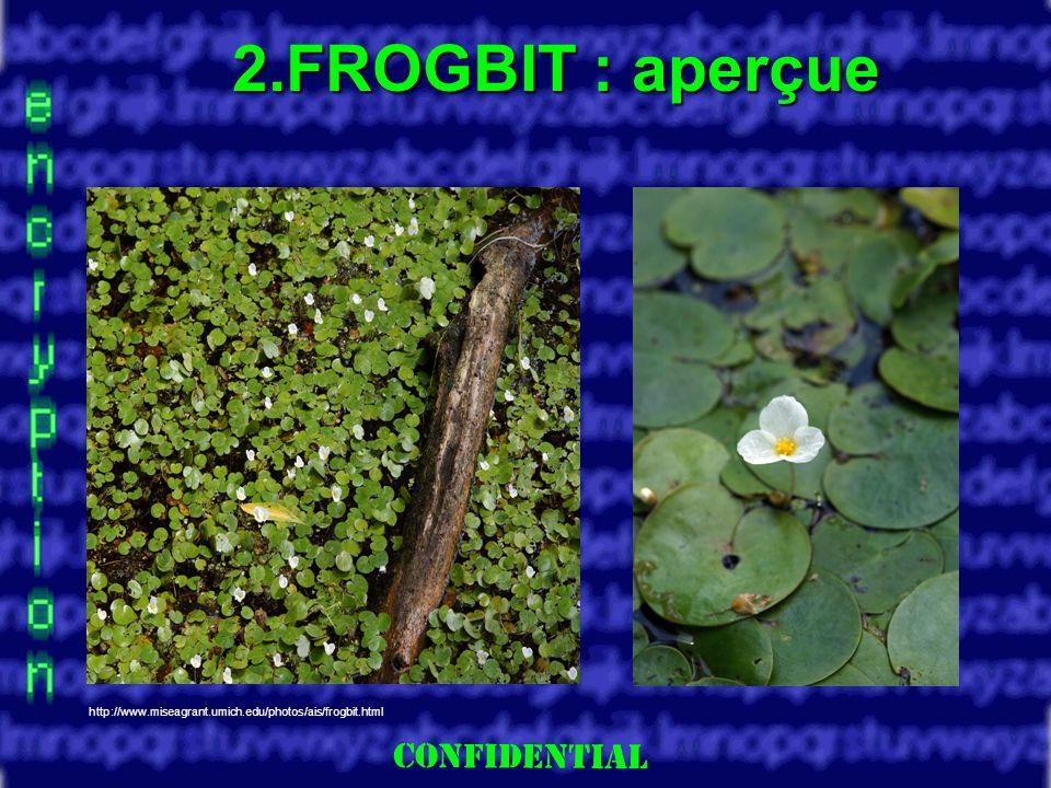 Slide 6 2.FROGBIT : aperçue http://www.miseagrant.umich.edu/photos/ais/frogbit.html