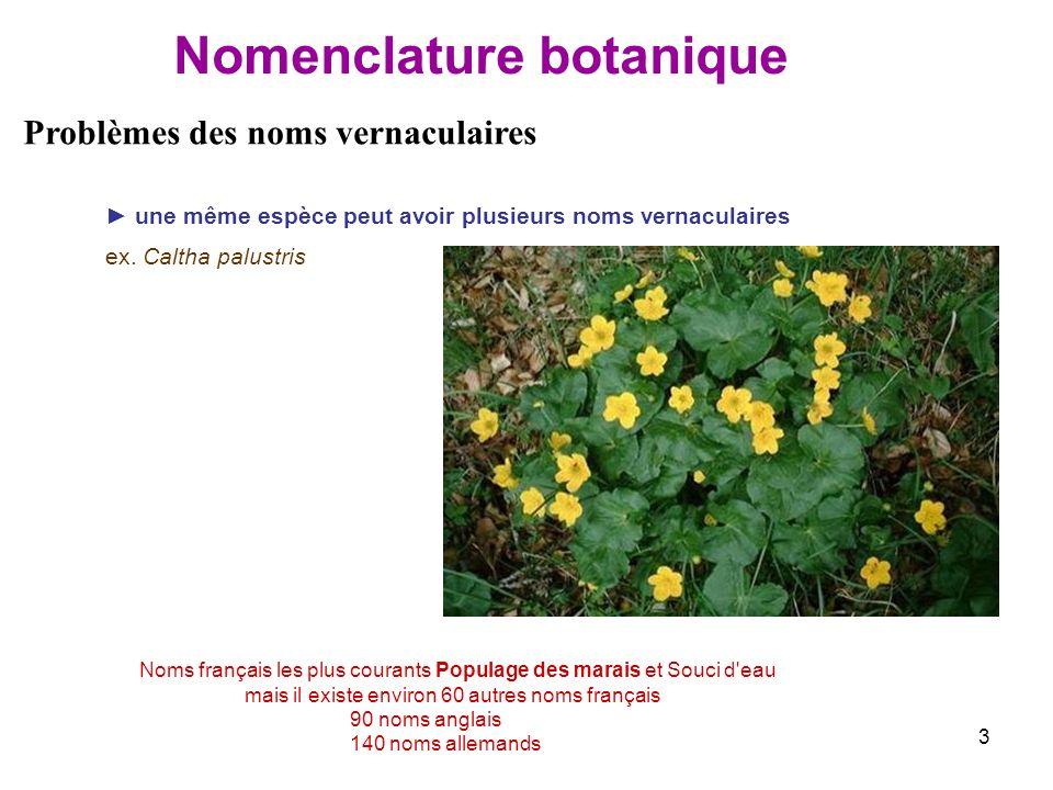 3 une même espèce peut avoir plusieurs noms vernaculaires ex. Caltha palustris Problèmes des noms vernaculaires Noms français les plus courants Popula