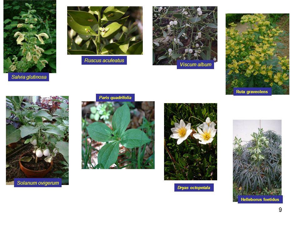 40 5.Histologie végétale : A. chez les végétaux il existe 2 sortes de tissus conducteurs B.