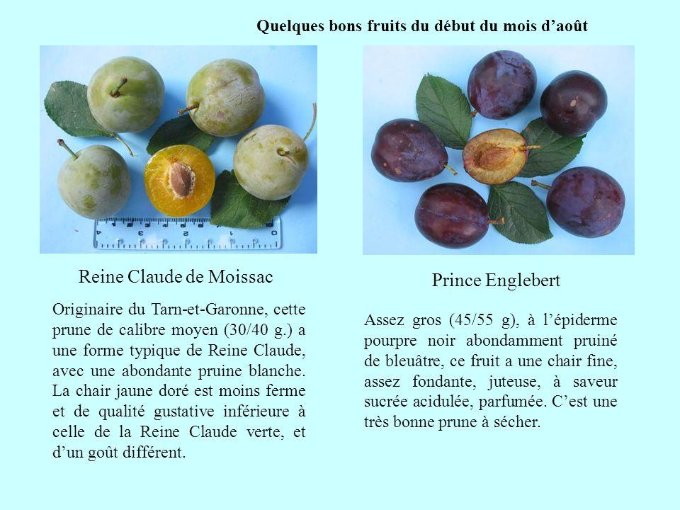 Quelques bons fruits du début du mois daoût Reine Claude de Moissac suite Originaire du Tarn-et-Garonne, cette prune de calibre moyen (30/40 g.) a une