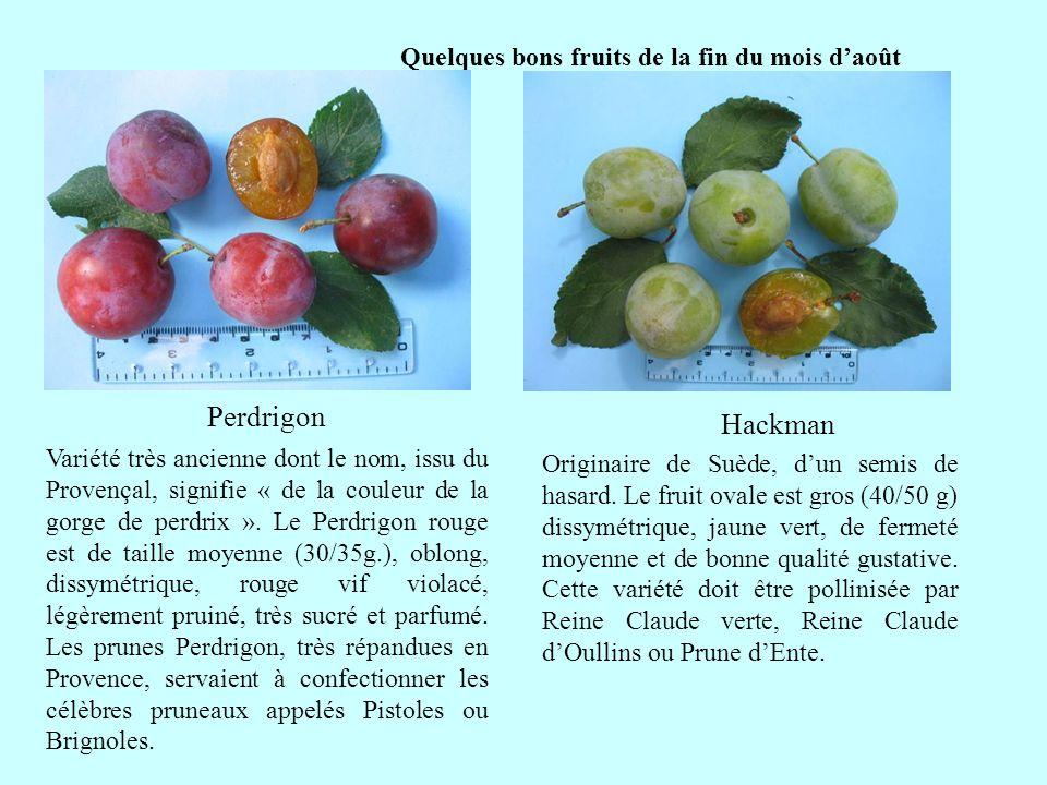 Quelques bons fruits de la fin du mois daoût Perdrigon suite Variété très ancienne dont le nom, issu du Provençal, signifie « de la couleur de la gorg