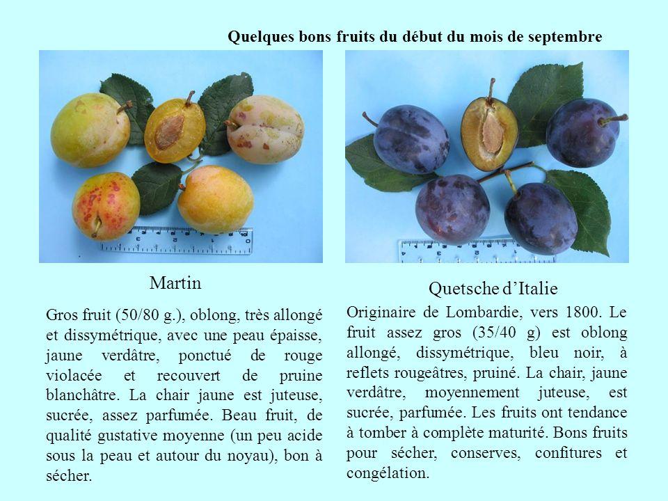 Quelques bons fruits du début du mois de septembre Quetsche dItalie Martin suite Originaire de Lombardie, vers 1800. Le fruit assez gros (35/40 g) est