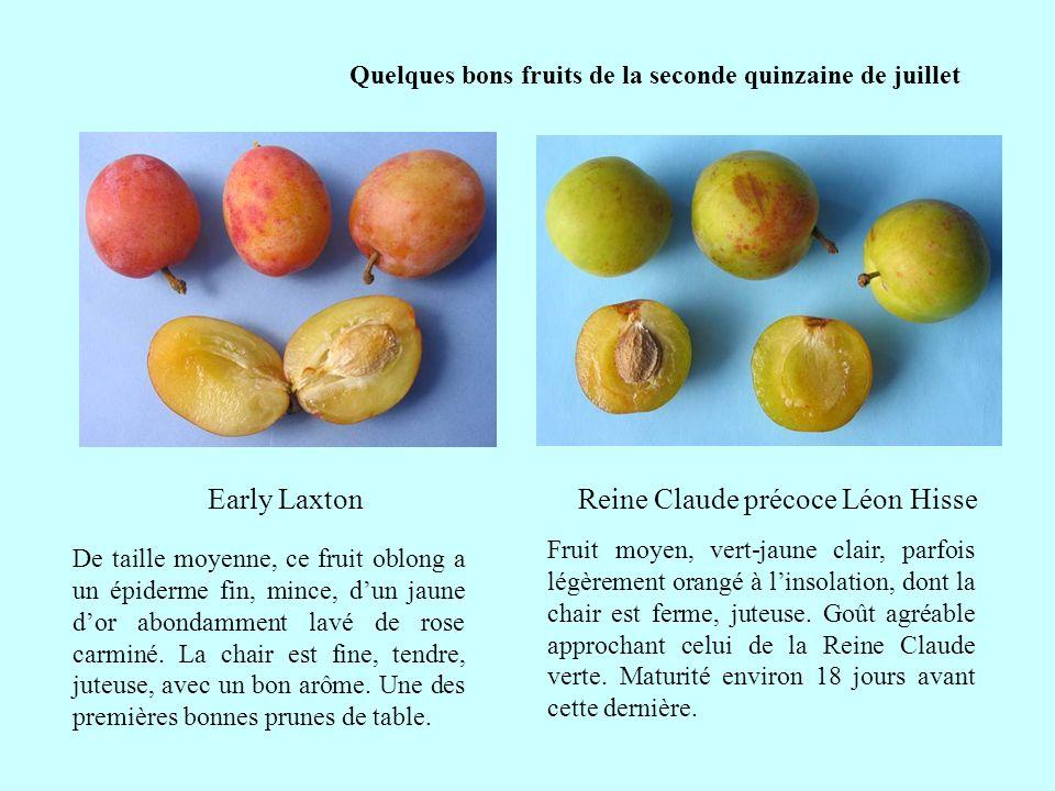 Quelques bons fruits de la seconde quinzaine de juillet Petit ou très petit (12/20g) fruit jaune dor, marbré de rouge amarante à linsolation.