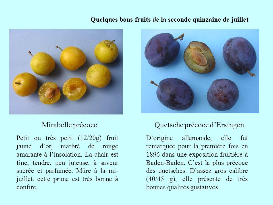 Quelques bons fruits de la seconde quinzaine de juillet Petit ou très petit (12/20g) fruit jaune dor, marbré de rouge amarante à linsolation. La chair