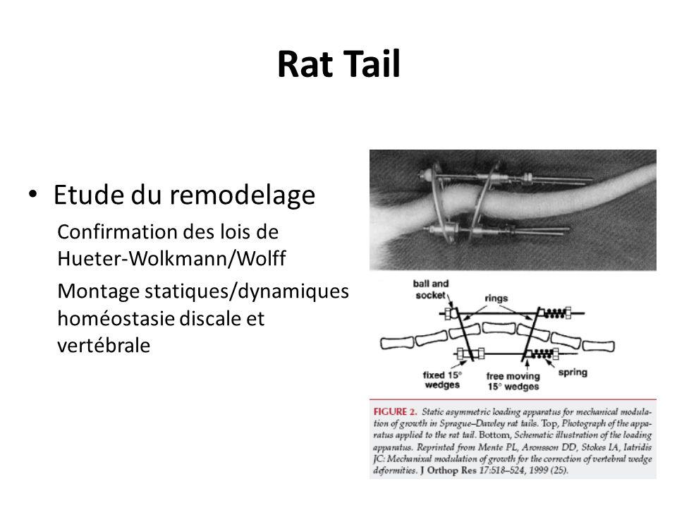 Rat Tail Etude du remodelage Confirmation des lois de Hueter-Wolkmann/Wolff Montage statiques/dynamiques homéostasie discale et vertébrale