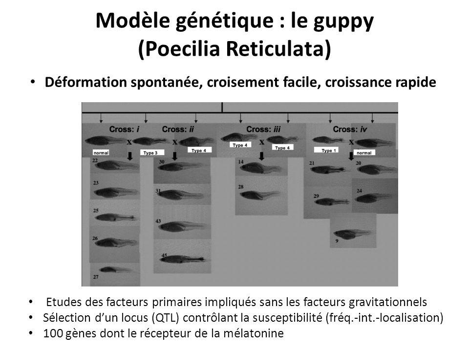 Modèle génétique : le guppy (Poecilia Reticulata) Etudes des facteurs primaires impliqués sans les facteurs gravitationnels Sélection dun locus (QTL) contrôlant la susceptibilité (fréq.-int.-localisation) 100 gènes dont le récepteur de la mélatonine Déformation spontanée, croisement facile, croissance rapide