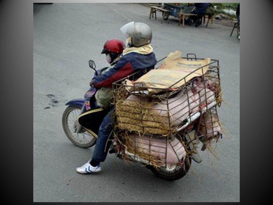 La moto encore et toujours, pour le transport de toute la famille ou des cochons… Tout un chacun se débrouille pour trouver une activité, sans trop compter sur laide de lEtat