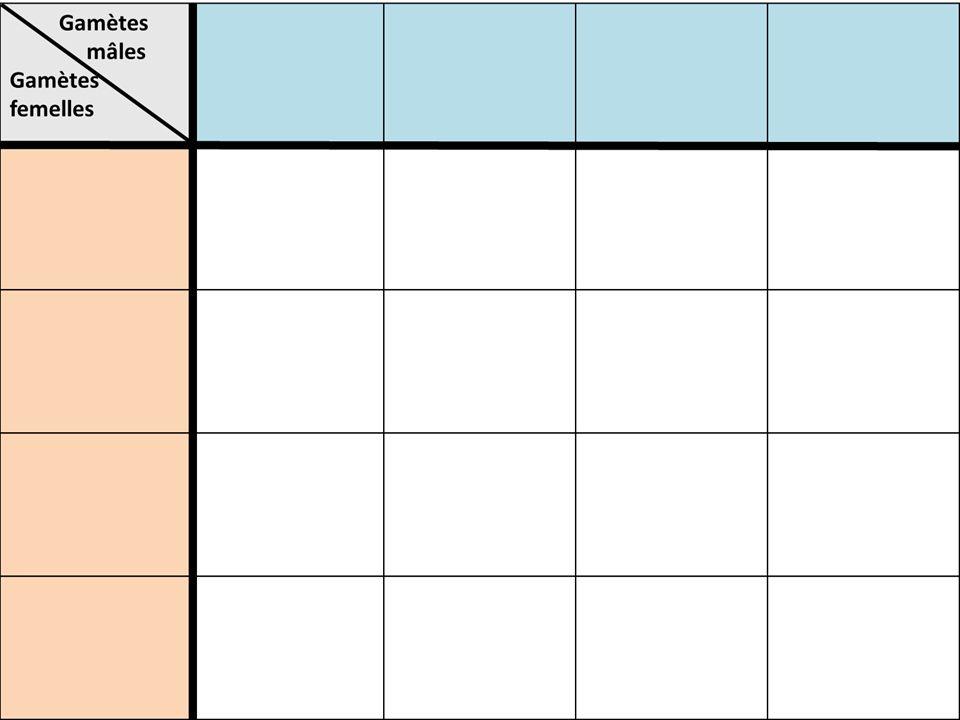 1)Réinscrire les différents allèles pouvant être produits (Il se peut que tu nais pas besoin de toutes les cases) 2)Inscrire ceux de ton partenaire (h