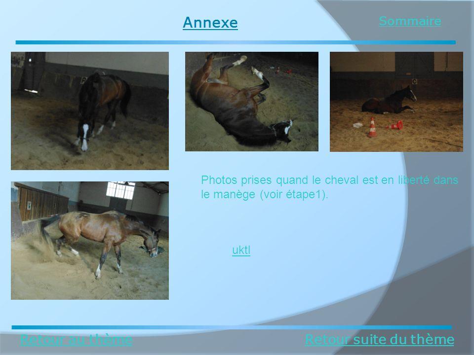 Annexe Retour au thèmeRetour suite du thème Sommaire Photos prises quand le cheval est en liberté dans le manège (voir étape1). uktl