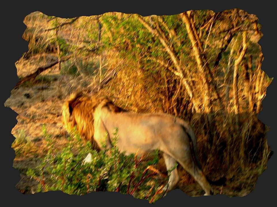 Jai choisi, pour illustrer le thème de mon diaporama, des photos que ma cousine Claire ma rapportées de lAfrique du Sud.
