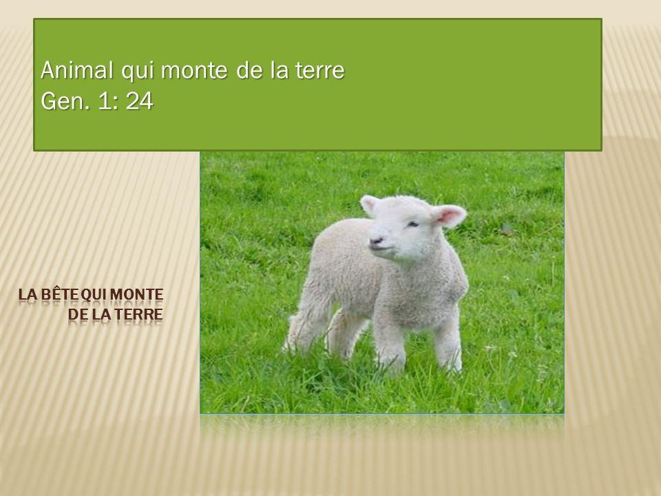 Animal qui monte de la terre Gen. 1: 24