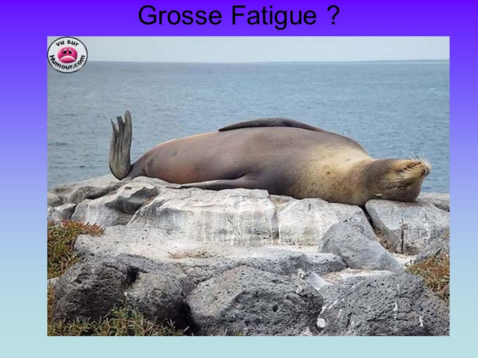 Grosse Fatigue ?