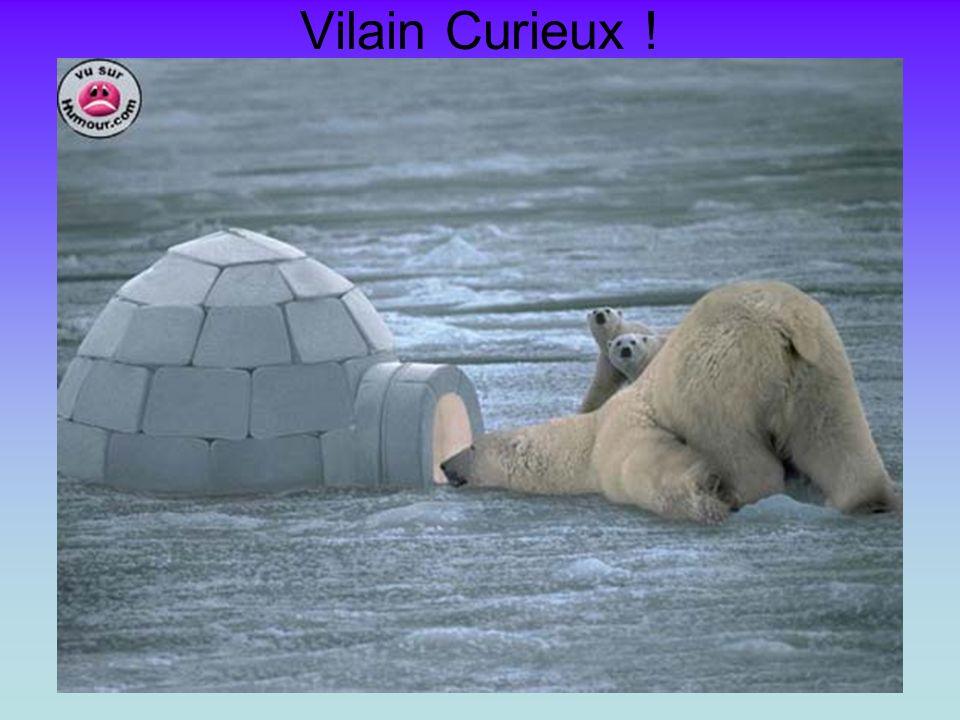 Vilain Curieux !