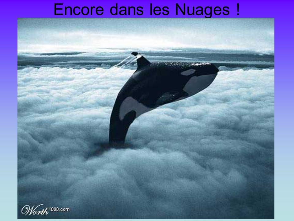 Encore dans les Nuages !