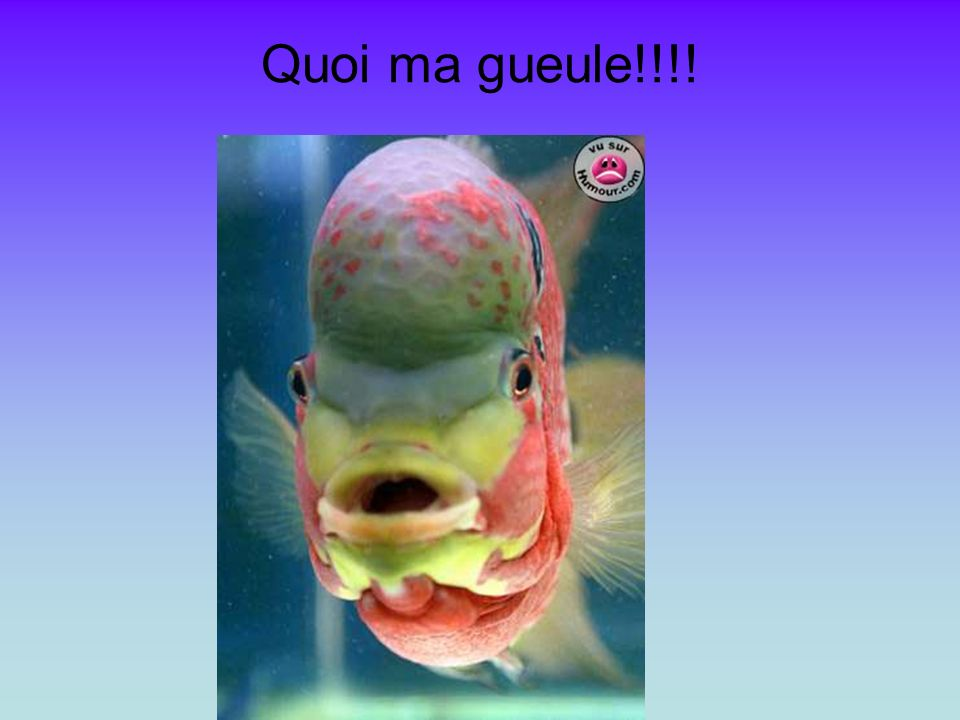 Quoi ma gueule!!!!