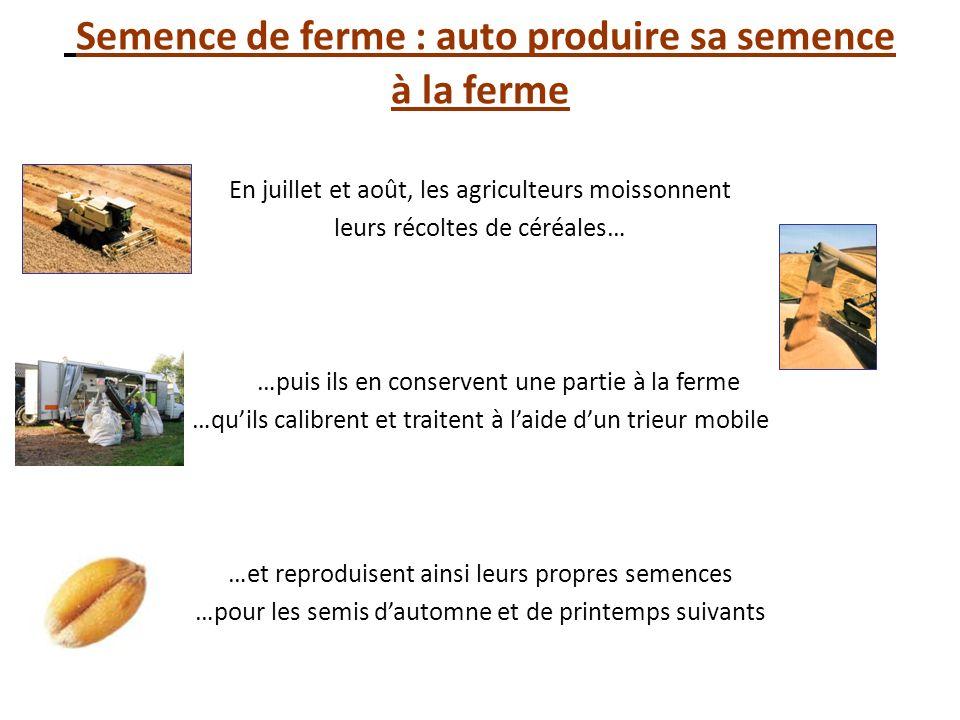 Semence de ferme : auto produire sa semence à la ferme En juillet et août, les agriculteurs moissonnent leurs récoltes de céréales… …puis ils en conse