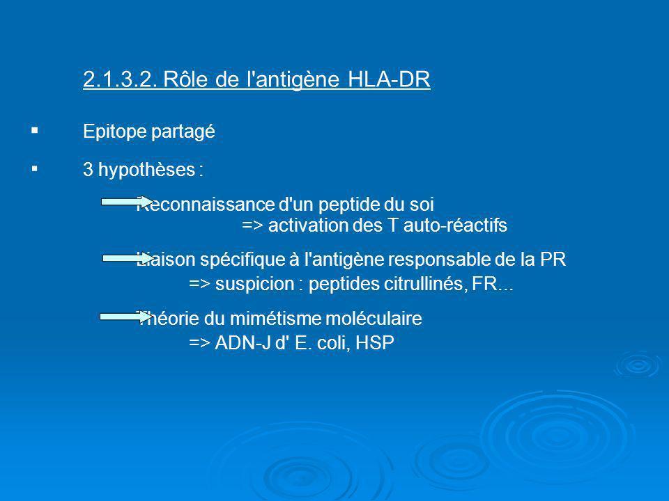 2.1.3.2. Rôle de l'antigène HLA-DR Epitope partagé 3 hypothèses : Reconnaissance d'un peptide du soi => activation des T auto-réactifs Liaison spécifi