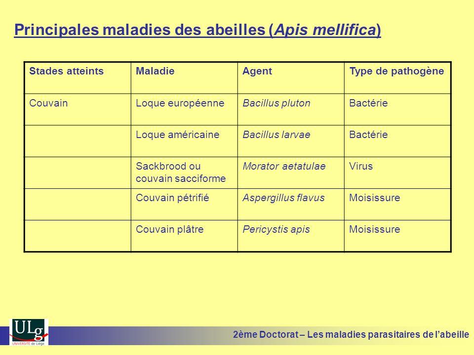 Principales maladies des abeilles (Apis mellifica) Stades atteintsMaladieAgentType de pathogène CouvainLoque européenneBacillus plutonBactérie Loque a