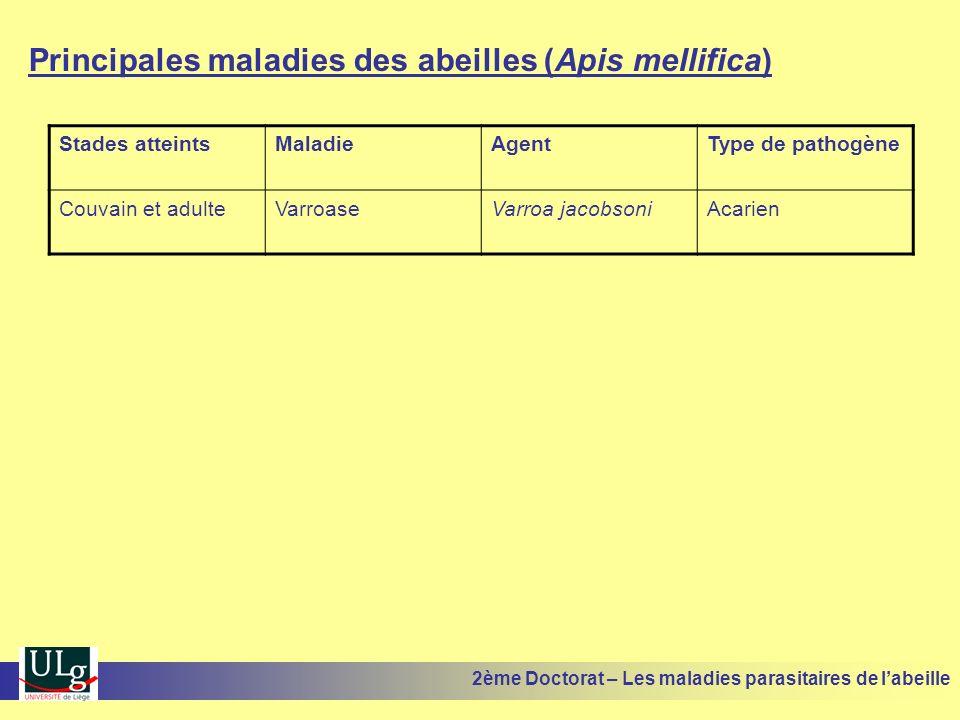 Principales maladies des abeilles (Apis mellifica) Stades atteintsMaladieAgentType de pathogène Couvain et adulteVarroaseVarroa jacobsoniAcarien 2ème