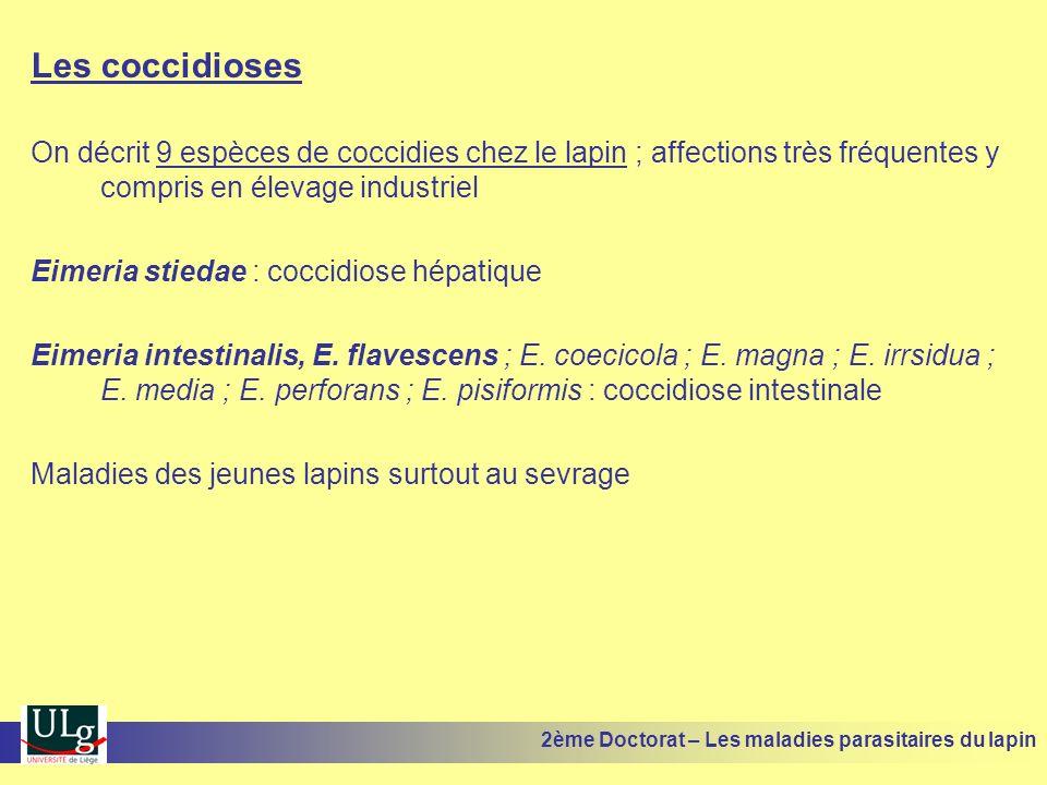Les coccidioses On décrit 9 espèces de coccidies chez le lapin ; affections très fréquentes y compris en élevage industriel Eimeria stiedae : coccidio