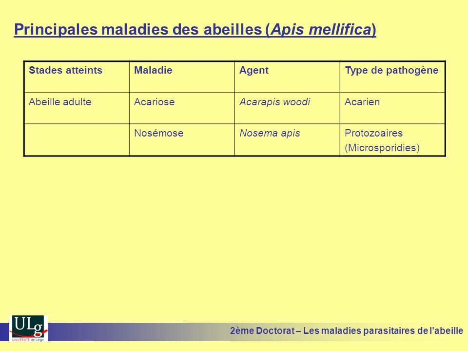 Principales maladies des abeilles (Apis mellifica) Stades atteintsMaladieAgentType de pathogène Abeille adulteAcarioseAcarapis woodiAcarien NosémoseNo