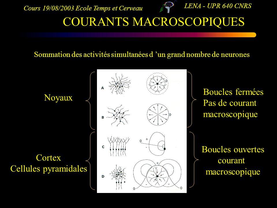 Cours 19/08/2003 Ecole Temps et Cerveau LENA - UPR 640 CNRS COURANTS MACROSCOPIQUES Sommation des activités simultanées d un grand nombre de neurones