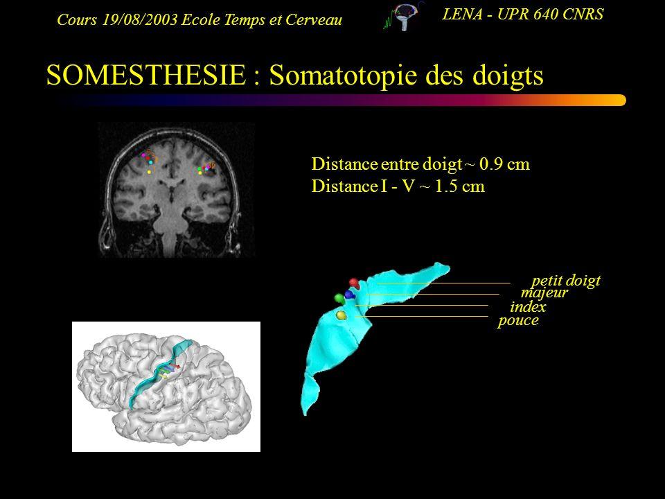 Cours 19/08/2003 Ecole Temps et Cerveau LENA - UPR 640 CNRS SOMESTHESIE : Somatotopie des doigts pouce index majeur petit doigt Distance entre doigt ~