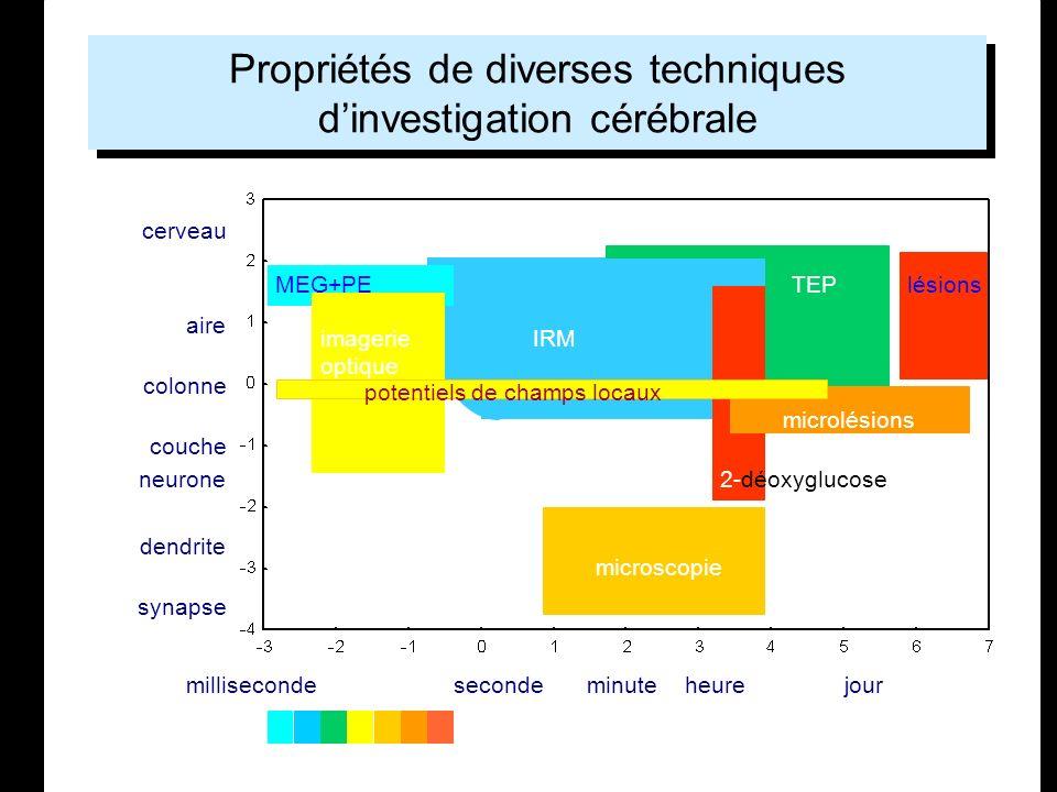 Cours 19/08/2003 Ecole Temps et Cerveau LENA - UPR 640 CNRS Propriétés de diverses techniques dinvestigation cérébrale millisecondesecondeminuteheurej