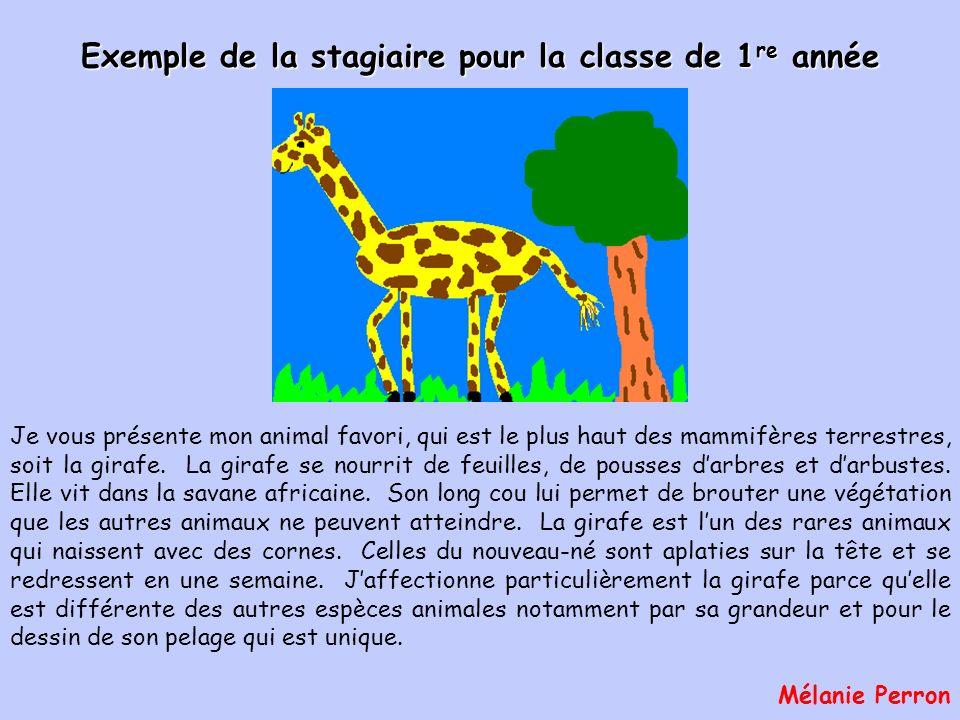 Je vous présente mon animal favori, qui est le plus haut des mammifères terrestres, soit la girafe.