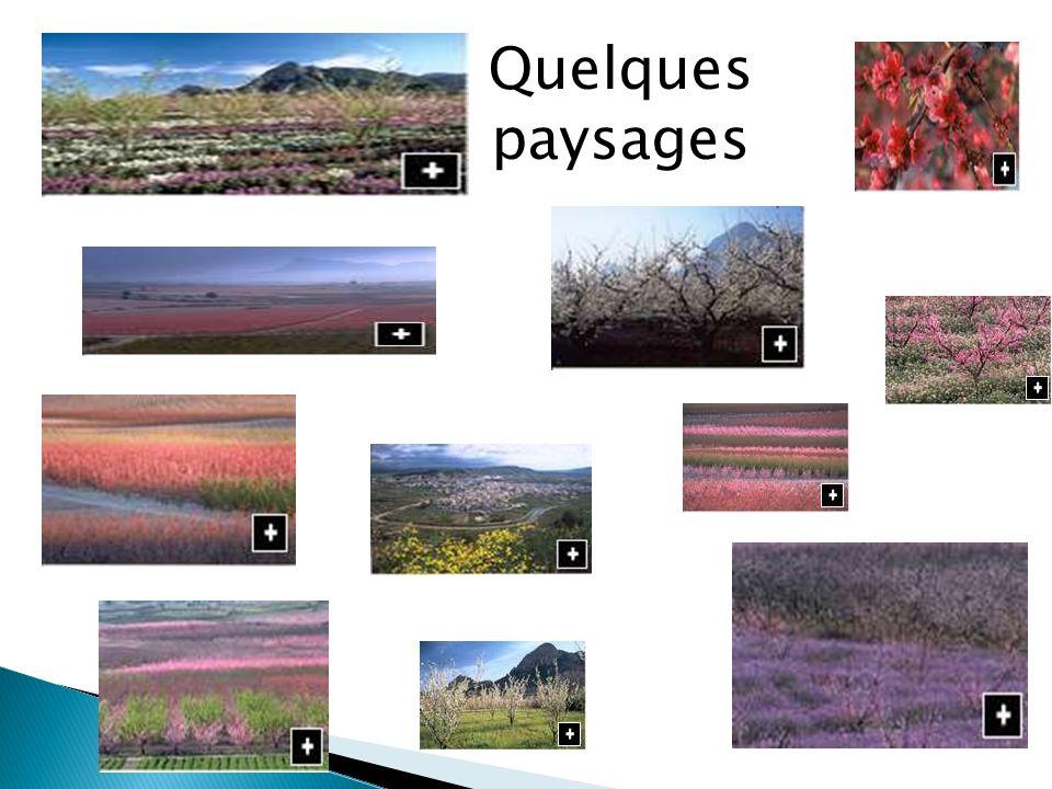Quelques paysages
