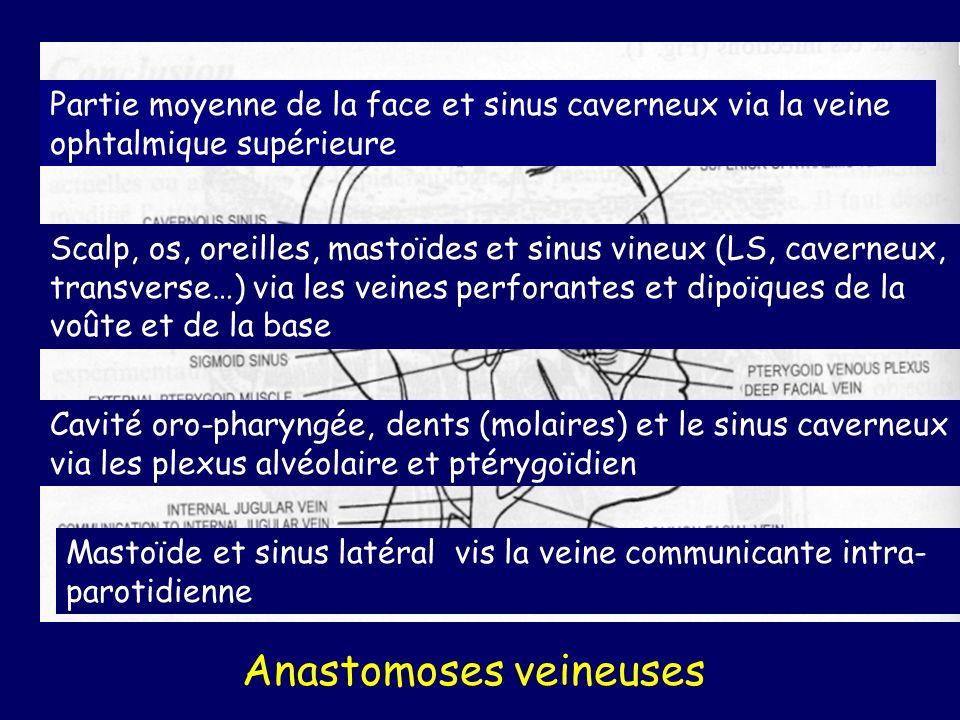 Autres germes que streptocoques et anaérobies « classiques » Foyers suppurés du thorax actinomyces (Nocardia) Endocardites S.