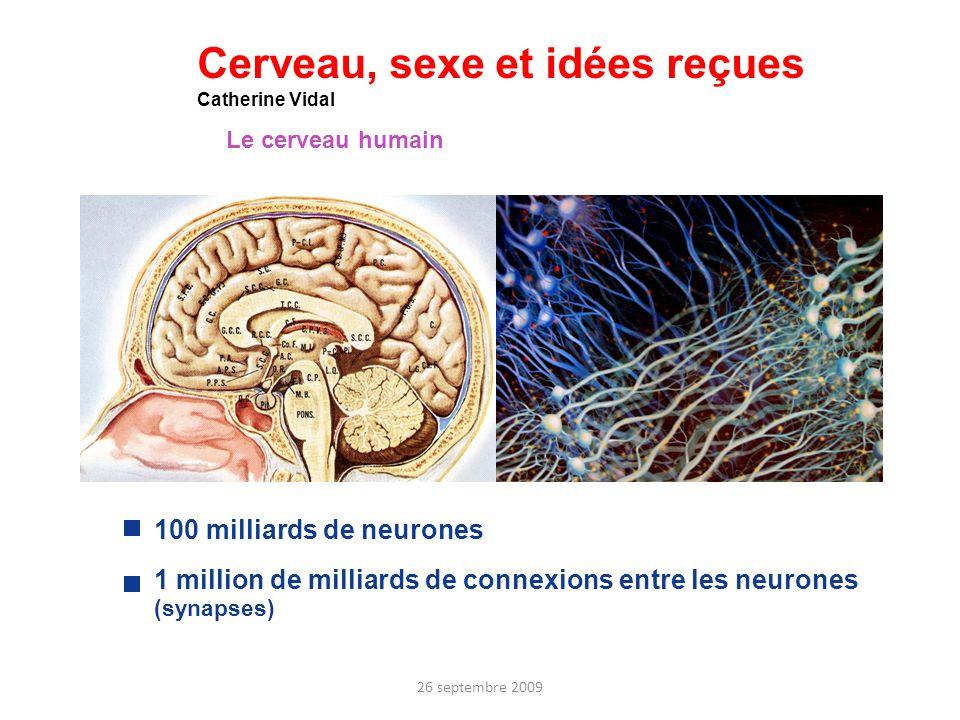 Cerveau, sexe et idées reçues Catherine Vidal Le cerveau humain 100 milliards de neurones 1 million de milliards de connexions entre les neurones (syn