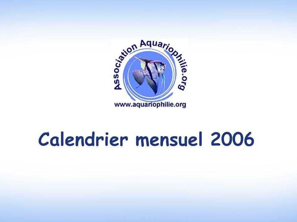 Calendrier mensuel 2006