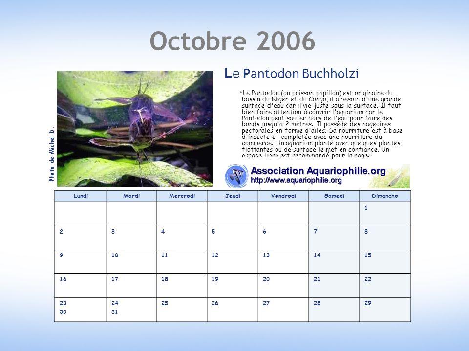 Octobre 2006 LundiMardiMercrediJeudiVendrediSamediDimanche 1 2345678 9101112131415 16171819202122 23 30 24 31 2526272829 Le Pantodon Buchholzi Le Pantodon (ou poisson papillon) est originaire du bassin du Niger et du Congo, il a besoin d une grande surface d eau car il vie juste sous la surface.