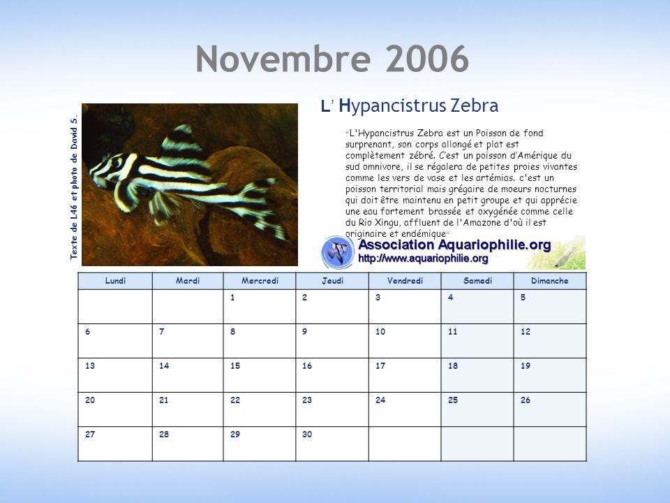 Novembre 2006 LundiMardiMercrediJeudiVendrediSamediDimanche 12345 6789101112 13141516171819 20212223242526 27282930 L Hypancistrus Zebra L Hypancistrus Zebra est un Poisson de fond surprenant, son corps allongé et plat est complètement zébré.