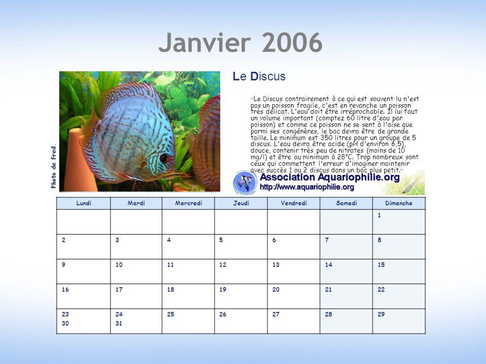Février 2006 LundiMardiMercrediJeudiVendrediSamediDimanche 12345 6789101112 13141516171819 20212223242526 2728 L Aphyosemion gardneri Le killi pond des œufs adhésifs que lont peut envoyer par la poste.
