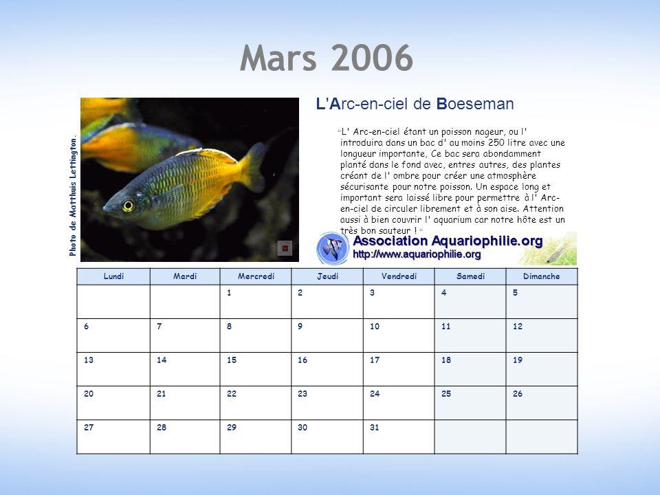 Mars 2006 LundiMardiMercrediJeudiVendrediSamediDimanche 12345 6789101112 13141516171819 20212223242526 2728293031 L Arc-en-ciel de Boeseman L Arc-en-ciel étant un poisson nageur, ou l introduira dans un bac d au moins 250 litre avec une longueur importante, Ce bac sera abondamment planté dans le fond avec, entres autres, des plantes créant de l ombre pour créer une atmosphère sécurisante pour notre poisson.