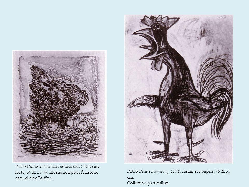 Pablo Picasso jeune coq, 1938, fusain sur papier, 76 X 55 cm.