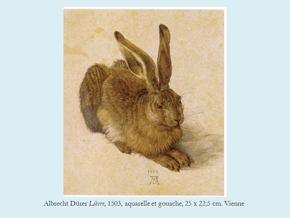 Albrecht Dürer Lièvre, 1503, aquarelle et gouache, 25 x 22,5 cm. Vienne