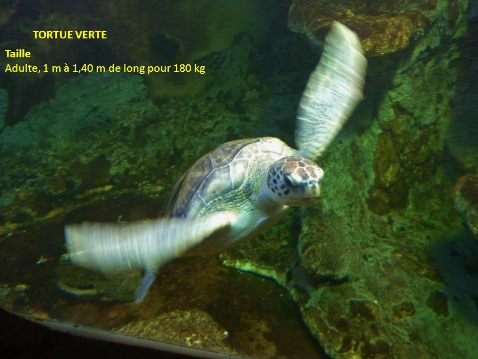 vieille Le terme vieille est le nom vernaculaire désignant en français principalement deux poissons du genre Labrus la vieille commune et la vieille c